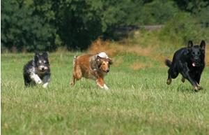 gute tierklinik analfistel hund